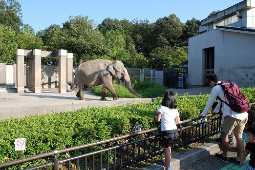 出典:http://www.ishikawazoo.jp/guide/animal/elephant.html